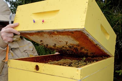 Hive with quilt box