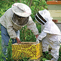 Beekeeping Classes and Events