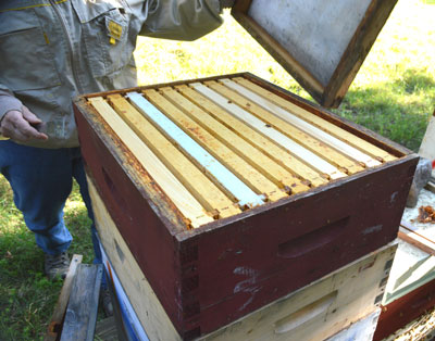 After the fume board is removed, bees will be out of the uppermost super.